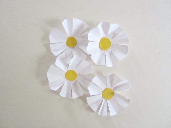 Paper-Daisies